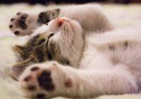 katinų priežiūra